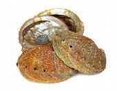 picture of pearl-oyster  - Four abalone shells on a white background - JPG