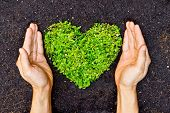 stock photo of sustainable development  - hands holding green heart shaped tree  - JPG