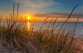 picture of sea oats  - Beautiful sunrise horizon signifies the dawn of a new day - JPG