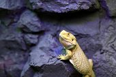 image of terrarium  - Lizard sitting on a rock at terrarium