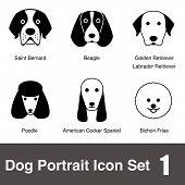 stock photo of bichon frise dog  - A lot of dog face - JPG