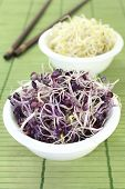 stock photo of alfalfa  - two bowls with radish sprouts and alfalfa sprouts - JPG