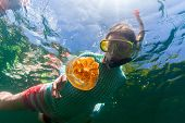 foto of jellyfish  - Underwater photo of tourist woman snorkeling with endemic golden jellyfish in lake at Palau - JPG