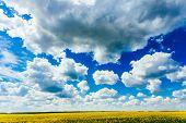 image of rape  - Green Field Blue Sky - JPG