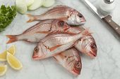 picture of red snapper  -  Fresh raw small red snappers on the table - JPG