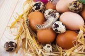 picture of manger  - Speckled quail eggs and chicken eggs in the manger on a wooden background - JPG