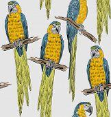 picture of parrots  - Vector sketch of a parrots - JPG