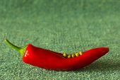 foto of green pea  - red pepper with green peas on a green matting - JPG