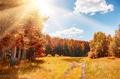foto of fantastic  - Beautiful autumn forest at sunny day - JPG