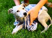 pic of wash-basin  - kids wash stray white puppy in yellow basin on the summer garden background - JPG