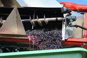 Harvesting Grapes. Harvesting Grapes By A Combine Harvester. poster