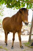 pic of mule  - The male mule with an elegant carriage - JPG