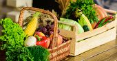 Homegrown Vegetables. Fresh Organic Vegetables In Wicker Basket And Wooden Box. Fall Harvest Concept poster