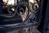 Fluffy cute tabby cat stays on fence poster