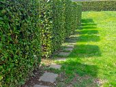 Shadows Of Square-shaped Shrubs Standing In A Row. Cultural Grooming Of Trees And Shrubs In The Spri poster