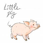 Hand Drawn Naughty Pig. Cute Funny Piglet Isolated On White Background. Pig Chinese Zodiac Symbol Of poster
