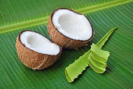 stock photo of aloe-vera  - Coconut and aloe vera - JPG