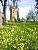 picture of cowslip  - Husaby stone church is one of the most notable churches in Sweden - JPG