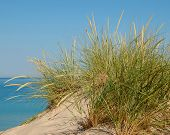 stock photo of dune grass  - Tall green grass growing at the top of a large sand dune with the blue sky and water in the background - JPG