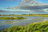 pic of marshlands  - summer marshland lake landscape with cloudy sky - JPG