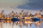 foto of fleet  - Lauwersoog harbours one of the biggest fishing fleets of the Netherlands - JPG