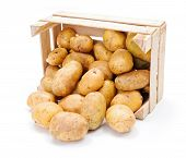 picture of solanum tuberosum  - Fresh white potatoes crop spreading out from wooden crate - JPG