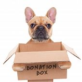 picture of placeholder  - french bulldog dog holding a donation box isolated on white background - JPG