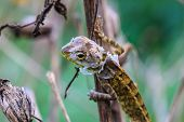foto of lizard skin  - Green Lizard changing skin resting on wood horizontal - JPG