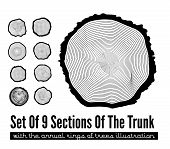stock photo of cross-section  - Set of 9 cross section of the trunk with tree rings - JPG