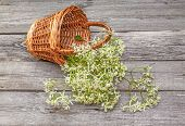 picture of meadowsweet  - Meadowsweet flowers in a basket on a wooden background - JPG