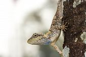 image of chameleon  - a cute Chameleon  - JPG