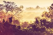 picture of jungle exotic  - tropical jungle in Mexico - JPG