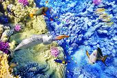 picture of shoal fish  - Wonderful and beautiful underwater world with corals and tropical fish - JPG