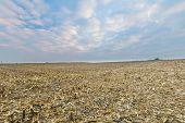stock photo of threshing  - Stubble field after corn - JPG
