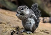 pic of chipmunks  - Chipmunk eating a seed on rocky ground - JPG