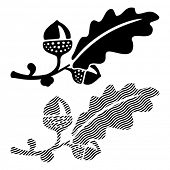 picture of acorn  - Oak leaf with acorns - JPG