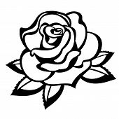 picture of single white rose  - Rose on a white background - JPG