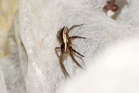 foto of terrestrial animal  - spider pets animals arachnid isolated animal brown - JPG