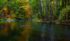 foto of marshlands  - Beautiful landscape with wild river in autumnal forest - JPG