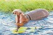 foto of hippopotamus  - Close encounters with hippopotamus in Chobe river in Botswana - JPG
