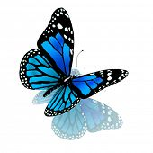 pic of blue butterfly  - Isolated butterfly of blue color on a white background - JPG