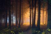Mystic Night Forest With Shining Light. Dark Woodland Illuminated By Magic Light poster