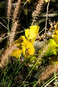 Green And Yellow Leaves Leaf Sunny Forest Wilderness Nature Symbolic, Sunflare Bokeh Depth Of Field poster