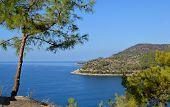 Mediterranean Mountains And Pines Mountain Sea Coastline View poster