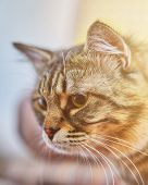 Portrait Of Striped Cat. Young Crazy Surprised Cat Make Big Eyes Closeup. Surprised Kitten Funny Fac poster