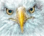 Watercolor Painting Of A White-headed Eagle; Conceptual Painting Of The Face Of An Eagle Looking At  poster
