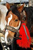 image of blinders  - Portrait of an adorned horse - JPG