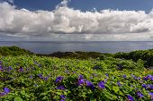 View Of The Green And Rocky Coastline In Terceira With Cliff In The Background. Landscape In Azores, poster