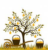 image of hand-barrow  - vector pear tree and hand barrow with basket of pears - JPG