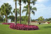 stock photo of fountain grass  - flowers and palms surround a pond on a golf course in florida - JPG